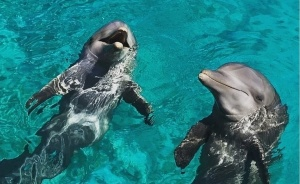Curacao Holiday Experience - Adventures